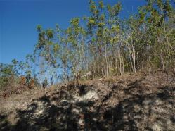 ciencia de cuba_portal de la ciencia cubana_protección de especies cinegéticas (49)