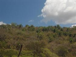 ciencia de cuba_portal de la ciencia cubana_protección de especies cinegéticas (66)