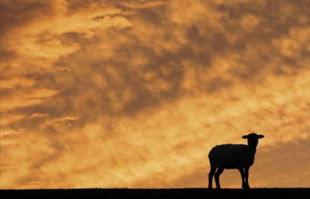 ovelha perdida