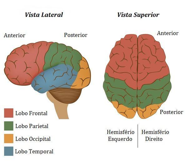Cerebro - Veja as incríveis mudanças que a meditação causa no cérebro