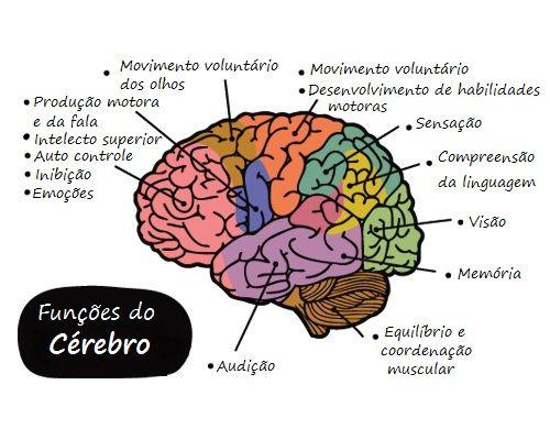 cerebro função - Veja as incríveis mudanças que a meditação causa no cérebro