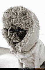 perro-preparado-para-la-ola-de-frio-rsm