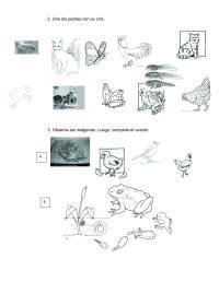 Ciclo Vital Del Ser Humano Para Colorear Dibujo De