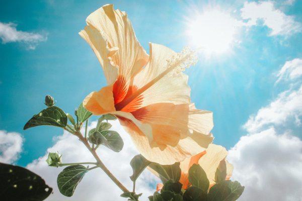 Guía básica para entender cómo funciona un protector solar (Parte I)