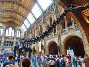 Muzeum Historii Naturalnej: Powitalny dizonaur na tle tłumów