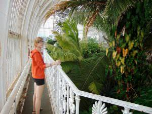 Balkon w palmiarni