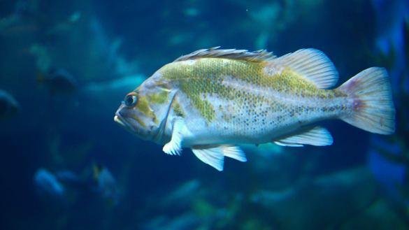 5 powodów, dlaczego Akwarium w Toronto jest słabe