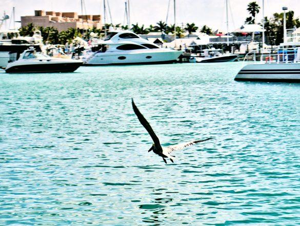 Key West – południe Florydy, delifiny i zdjęcia!