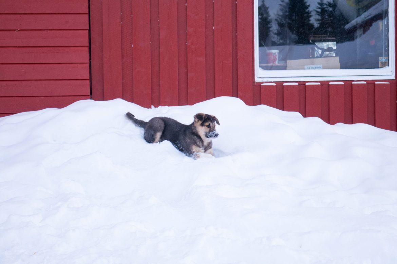 ...na razie radośnie się bawią w śniegu!