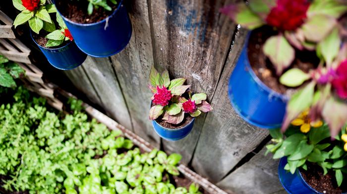 Backyard-Tin-Can-Fence-Garden-8