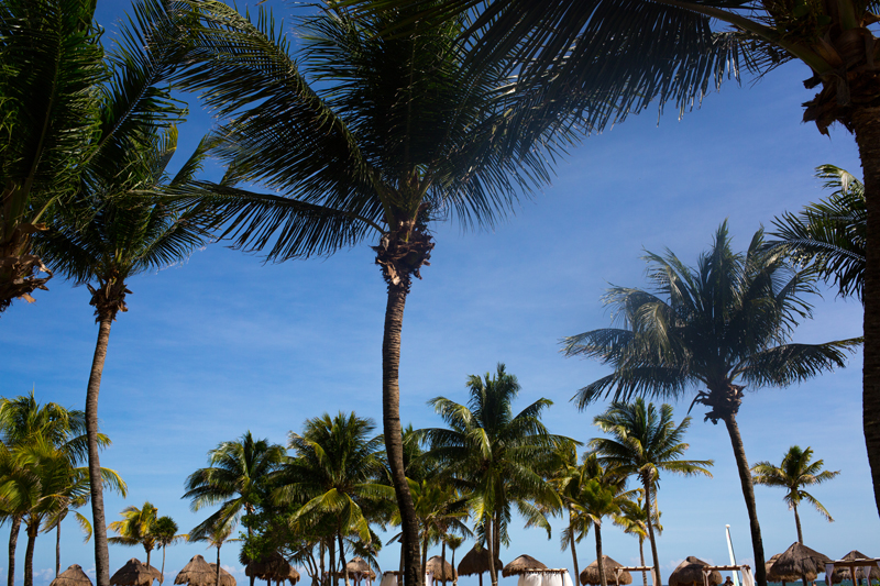 Palm Trees Huts on Tulum Beach Mexico Travel