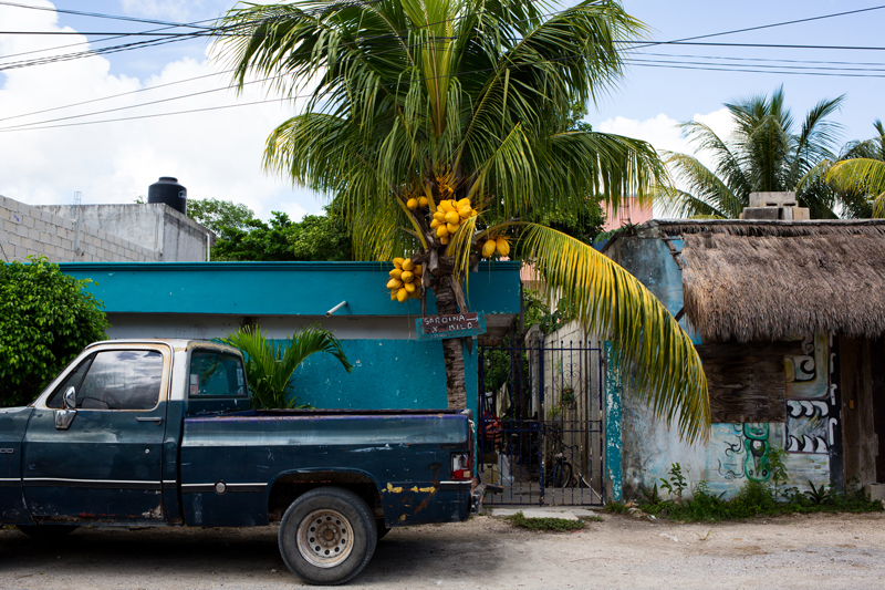 Old Truck and Palm Tree in Tulum Mexico