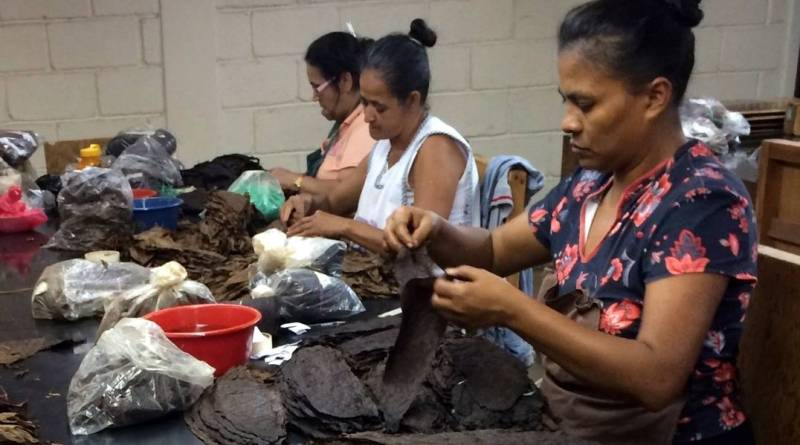 Workers sort tobacco leaves at a cigar factory in Nicaragua