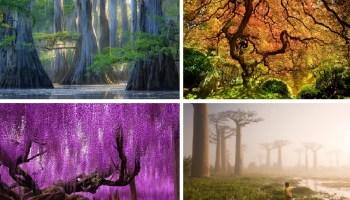 10 дерев, які виглядають, наче з іншої планети