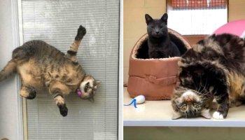 14 кадрів, які доводять, що будні котів нудними не бувають