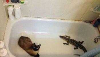 20 кращих фото із серії «У мене немає кота»