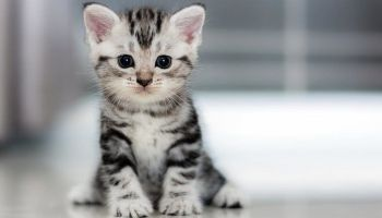 У нас в будинку з'явився звичайний безпородний кіт Васька. Це наш перший вихованець сімейства котячих, і для мене стало справжнім відкриттям, яке це величезне задоволення — ростити кошеня