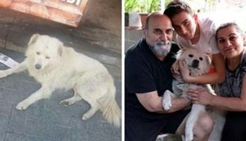 Загубленого собаку знайшли за сотні кілометрів від дому!