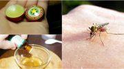 Дієві та натуральні засоби, щоб комарі та мухи більше не набридали