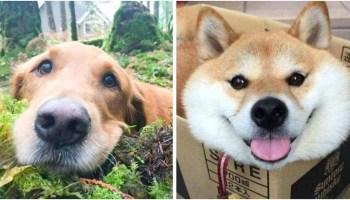Підбірка знімків наймиліших тварин, які дарують позитив і радість