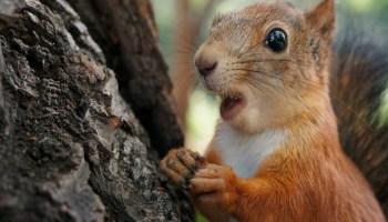 Найсмішніші фото тварин, які вміють дивуватися