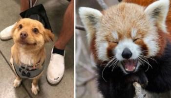 15 фото тварин, які піднімуть настрій на весь день