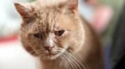 Одного дня рудий кіт опинився на вулиці. Йому довго довелося безпритульно тинятися смітниками, поки незнайомий голос не врятував його