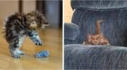 Коли твій кіт справжній мисливець: добірка дуже милих і веселих фотографій з домашніми улюбленцями