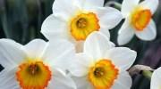 10 найнебезпечніших квітів в світі