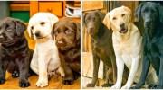 15 фотографій тварин, які росли і дорослішали разом