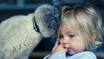 Котячий лямур: чудові фото