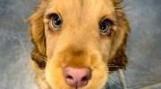 Малятко Вінні дуже нагадує діснеївську собачку-принцесу