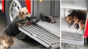 Собака рятувала своїх цуценят з вогню і виносила їх прямо в пожежну машину