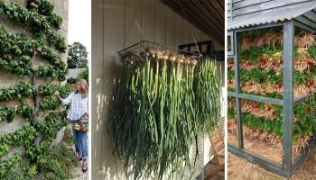 25 несподіваних і корисних ідей для городу та саду