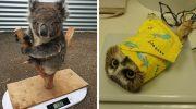 13 веселих фотографій, які показують, на які хитрощі доводиться йти, щоб зважити тварин в зоопарку