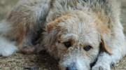 Одновухий собака зміг пробудити в душі Сергія любов та добро