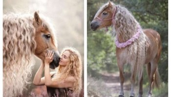 Мешканка Голландії показала світу свого коня з разюче довгою гривою, і він наче з казки!