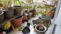7 veggies you can grow on the balcony in Malaysia!