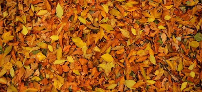 Should I Rake Leaves Fall