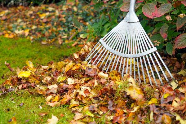 Should I Rake Leaves