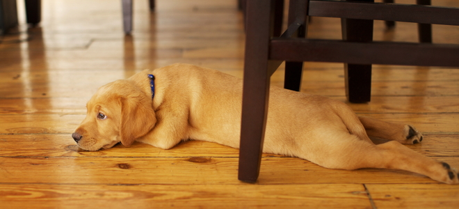 3 Lowcost Pet Odor Removal Options for Hardwood Floors