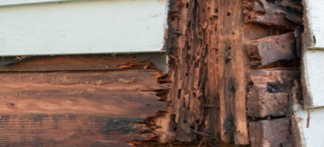How to Repair Dry Rot Yourself  DoItYourselfcom