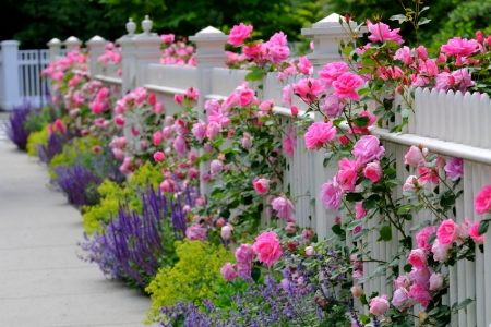 Three Decorative Garden Fence Ideas DoItYourself Com