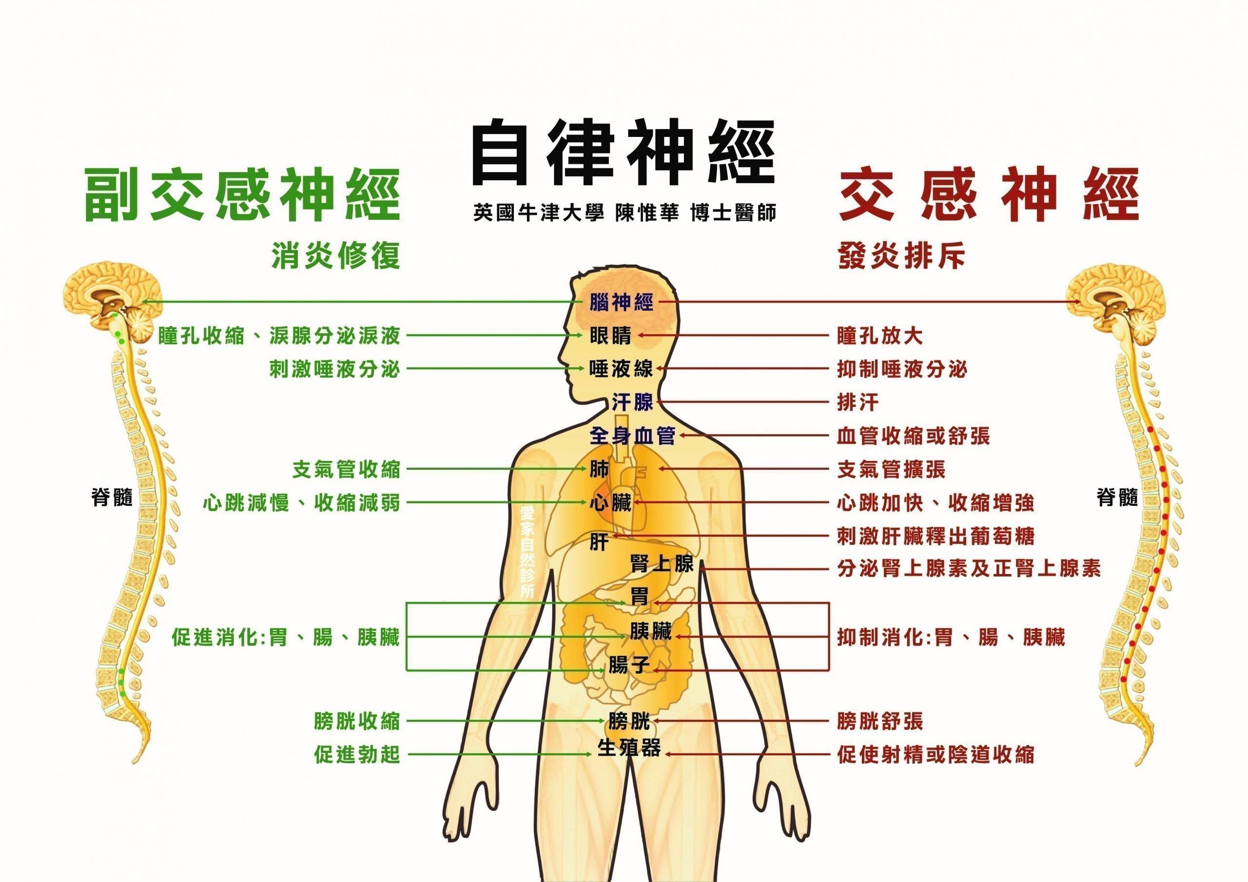 自癒力原來就是「自律神經」 – 中華整合醫學與健康促進協會