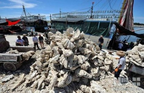 17 May 2012: Heap of the endangered giant clams harvested by Tanmen fishing vessel Qionghai 05008.