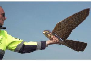 robird-anti-vogeldrohne-clear-air-solutions-jpg-8335688
