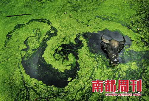 polluted-water-004