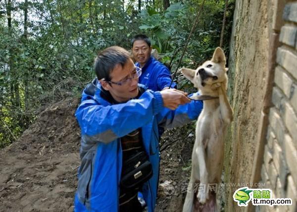 killing_dog_4-Dog abuse in China