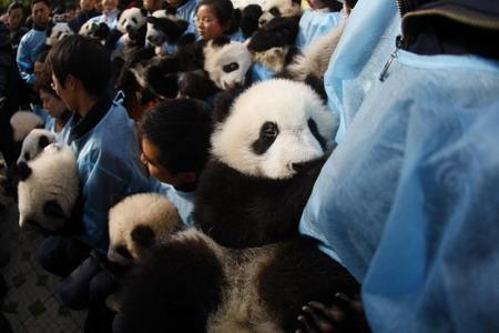 Panda a Taiwan