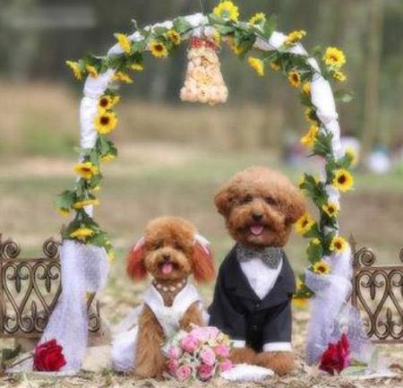 Matrimonio tra cani